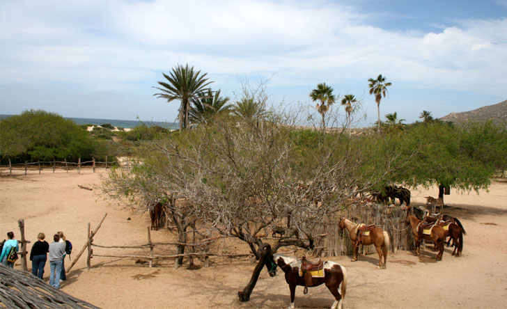 Guided Horseback Ride