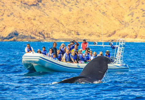 whale-watching-cabo